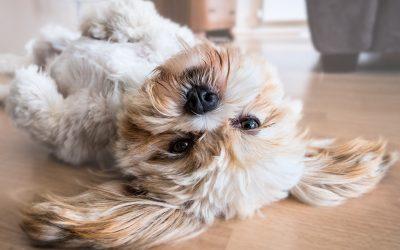 Den Hund namens Ego zähmen (Robert J. Tamasy)